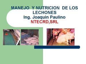 MANEJO Y NUTRICION DE LOS LECHONES Ing Joaquin