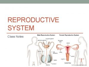 REPRODUCTIVE SYSTEM Class Notes Male Reproductive System The