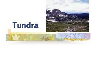 Tundra Tundra n n A cold biome of