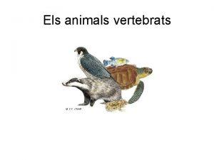 Els animals vertebrats Caracterstiques generals dels animals Sn