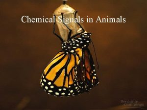 Chemical Signals in Animals Learning Objectives 3209 Differentiate