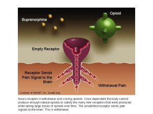 Opioid Buprenorphine Empty Receptor Sends Pain Signal to