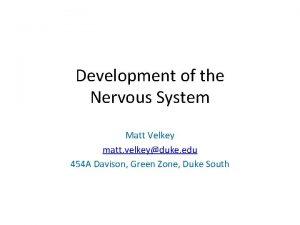Development of the Nervous System Matt Velkey matt