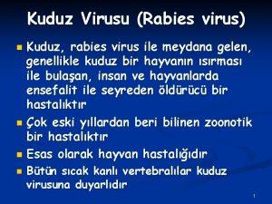 Kuduz Virusu Rabies virus Kuduz rabies virus ile