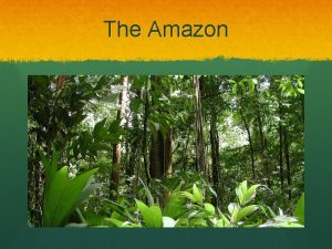 The Amazon The amazon forest is located in