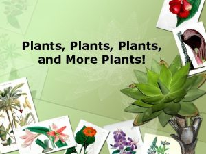 Plants and More Plants Biodiversity of Life Plant