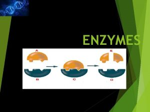 ENZYMES ENZYMES Speedy Proteins IMPORTANCE OF ENZYMES Enzymes