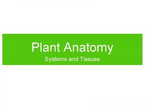 Plant Anatomy Systems and Tissues Plant Structure Root