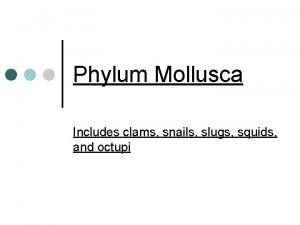 Phylum Mollusca Includes clams snails slugs squids and