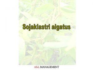 Probleemanals Eestis kasvatatakse sojauba vga vikestes kogustes kuid