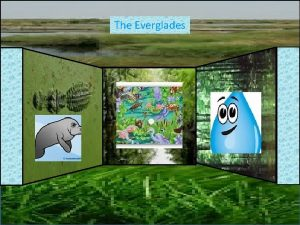 The Everglades Reilly What the everglades is The
