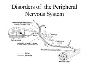 Disorders of the Peripheral Nervous System Peripheral Nerve