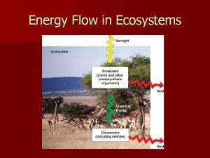 Energy Flow in Ecosystems I Thermodynamics A n
