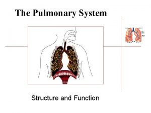 The Pulmonary System Structure and Function Lungs l