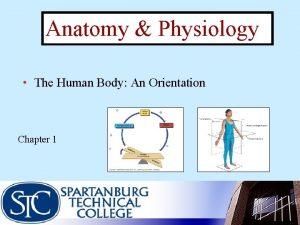 Anatomy Physiology The Human Body An Orientation Chapter