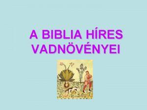 A BIBLIA HRES VADNVNYEI A Biblia nvad nvnye