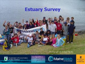 Estuary Survey Photograph Indigo Pacific Karakia Ko Rangi