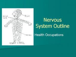 Nervous System Outline Health Occupations Nervous System Functions