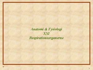 Anatomi Fysiologi XXI Respirationsorganerne 1 Anatomi Fysiologi Lektion