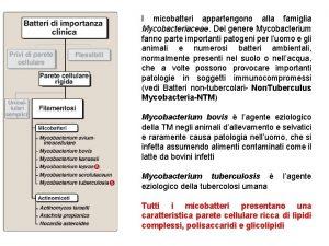 I micobatteri appartengono alla famiglia Mycobacteriaceae Del genere