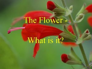 The Flower What is it The Flower What