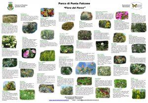 Parco di Punta Falcone Comune di Piombino Quartiere