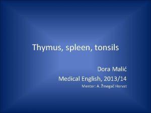 Thymus spleen tonsils Dora Mali Medical English 201314