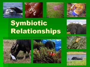 Symbiotic Relationships Symbiotic Relationships symbiosis the relationship between