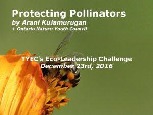 Protecting Pollinators by Arani Kulamurugan Ontario Nature Youth