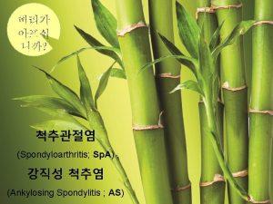 Spondyloarthritis Sp A Ankylosing Spondylitis AS Spondyloarthritis Sp
