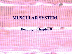 MUSCULAR SYSTEM Reading Chapter 8 1 MUSCULAR SYSTEM