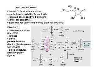 Vitamina C funzioni metaboliche mantenimento metalli in forma