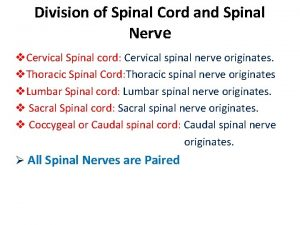 Division of Spinal Cord and Spinal Nerve v