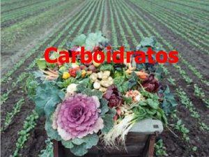 Carboidratos CARBOIDRATOS n n n Podem ser classificados