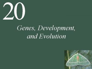 20 Genes Development and Evolution 20 Genes Development