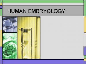 HUMAN EMBRYOLOGY After fertilization of the egg let