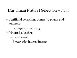 Darwinian Natural Selection Pt 1 Artificial selection domestic