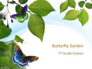 Butterfly Garden 7 th Grade Science Butterfly Journey