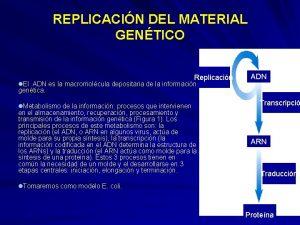 REPLICACIN DEL MATERIAL GENTICO Replicacin l El ADN