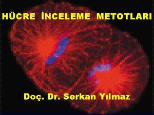 HCRE NCELEME METOTLARI Do Dr Serkan Ylmaz Hcre