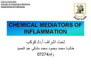 Cairo University Faculty of Veterinary Medicine Department of