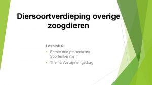 Diersoortverdieping overige zoogdieren Lesblok 6 Eerste drie presentaties