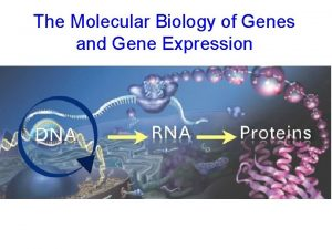The Molecular Biology of Genes and Gene Expression