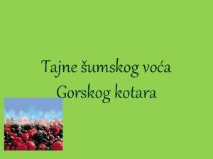 Tajne umskog voa Gorskog kotara Borovnice umska borovnica