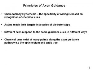 Principles of Axon Guidance Chemoaffinity Hypothesis the specificity