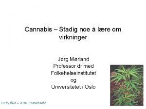 Cannabis Stadig noe lre om virkninger Jrg Mrland