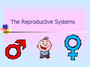 The Reproductive Systems Male Reproductive System n Function
