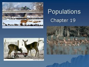 Populations Chapter 19 Understanding Populations Section 19 1