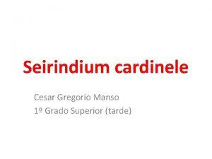 Seirindium cardinele Cesar Gregorio Manso 1 Grado Superior