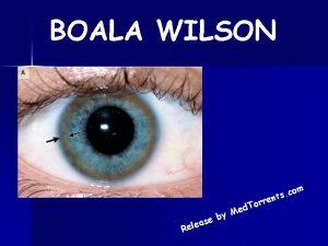 BOALA WILSON om c s nt e r
